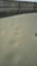 砂丘の名残