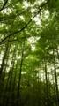 [旅行]生田緑地、メタセコイアの林
