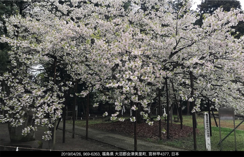 f:id:yuken1220:20190427052828j:image