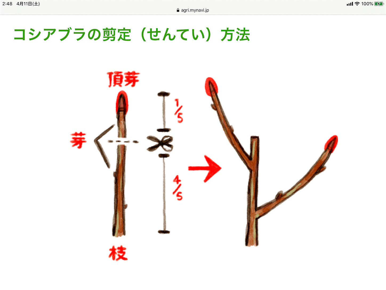 f:id:yuken1220:20200411032637p:image