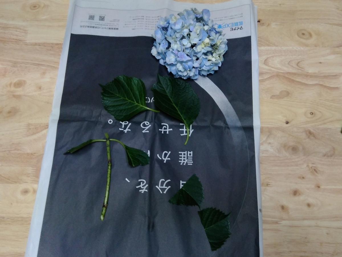 f:id:yuki-freestyle-sk8:20190621055425j:plain