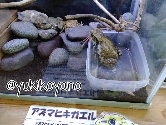 f:id:yuki-freestyle-sk8:20190727054557j:plain