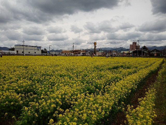 f:id:yuki-happy-oki:20210411194158j:image