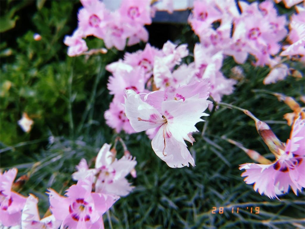 f:id:yuki-shudo-8:20191129031530j:image