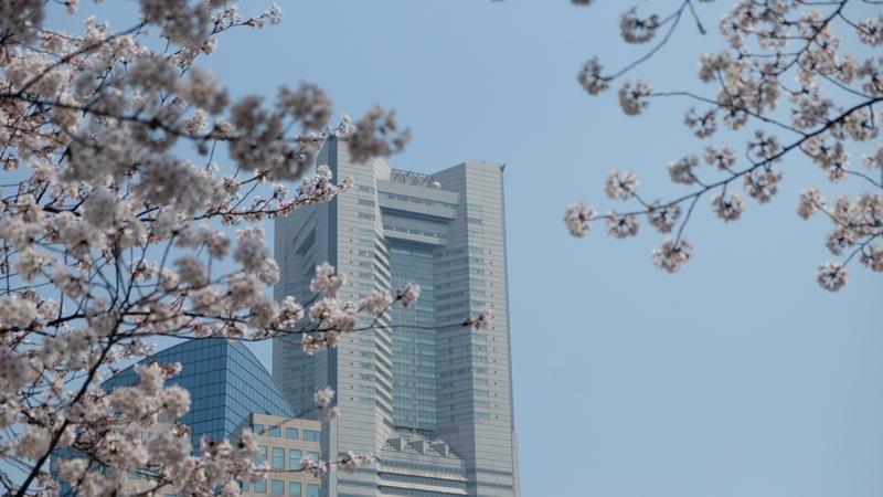 桜とランドマークタワー(ランドマークタワー)