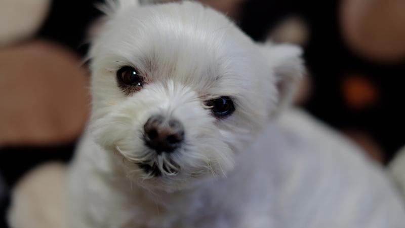 祖父母宅の愛犬