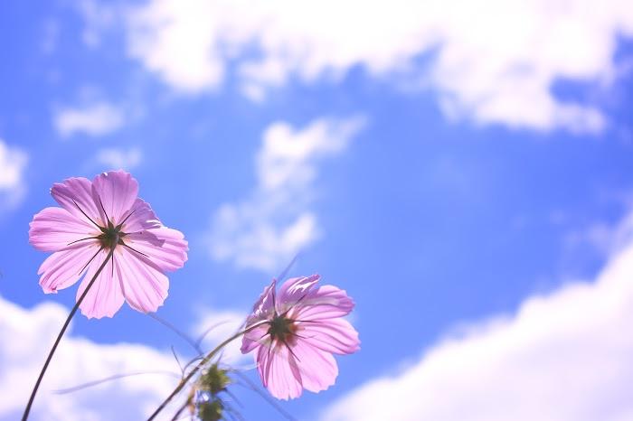 f:id:yuki-uehara-1319:20161109081251j:plain