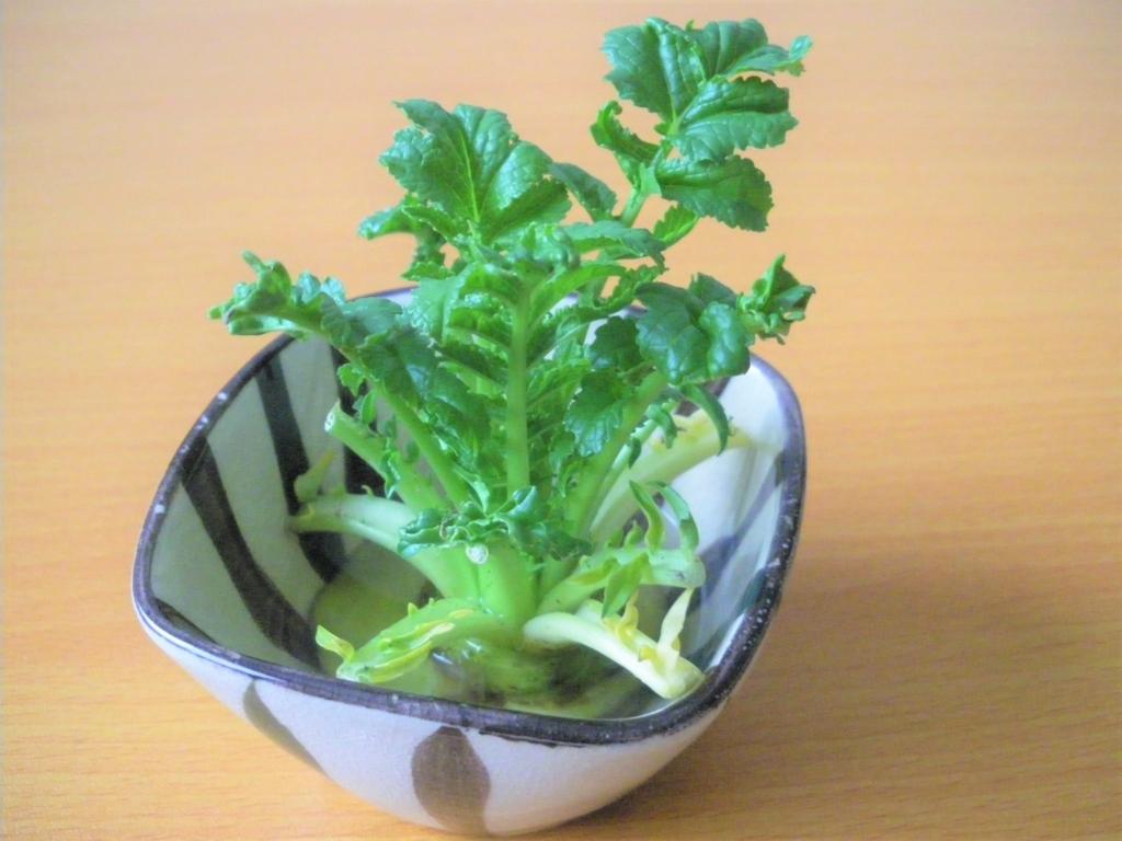 大根の葉の水耕栽培7日目の画像