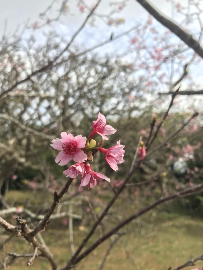 f:id:yuki_2021:20170217102539j:plain