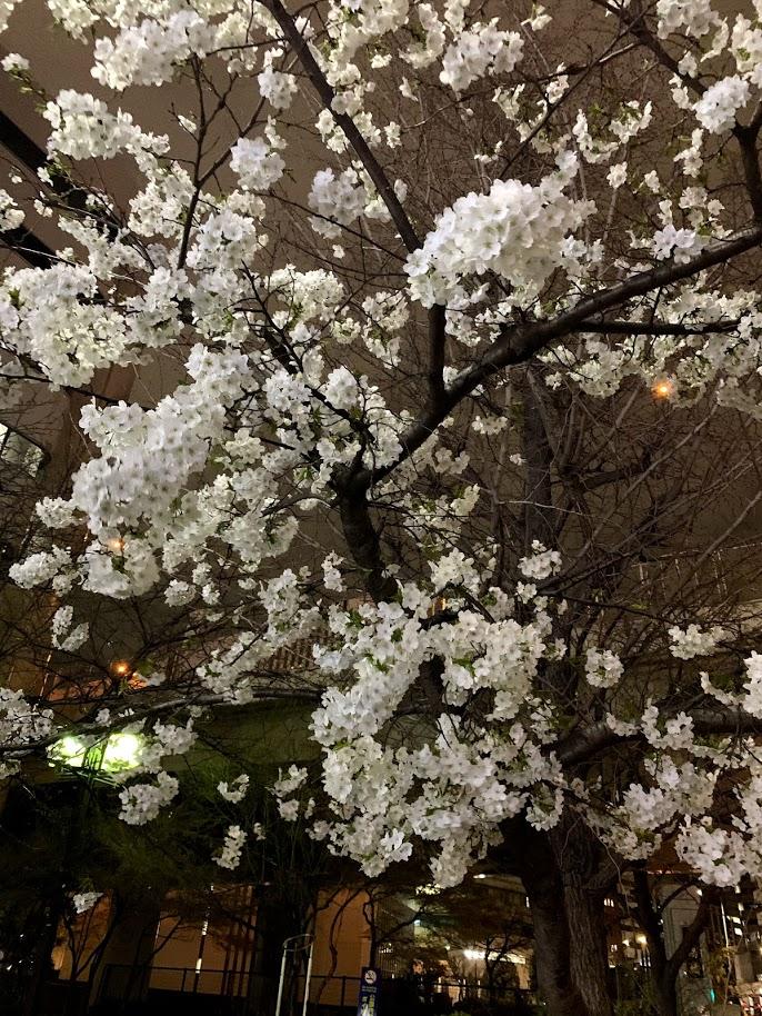 f:id:yuki_2021:20190325220526p:plain