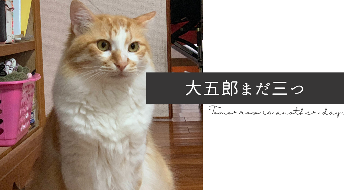f:id:yuki_2021:20210611084529p:plain