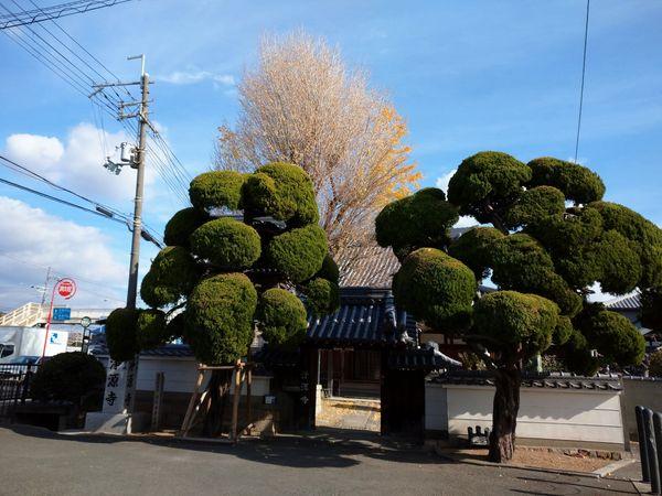 f:id:yuki_arcadia:20201215142859j:plain