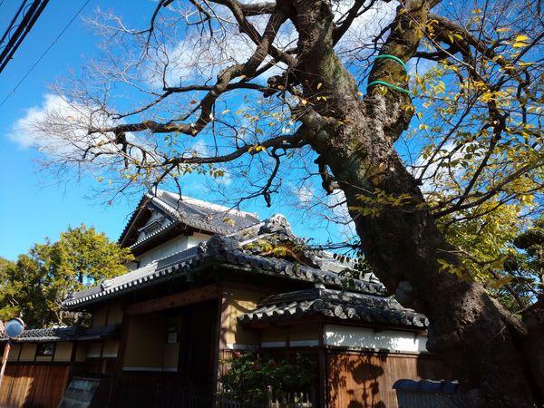 f:id:yuki_arcadia:20201220195159j:plain