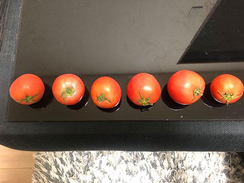 トマトを使った療育