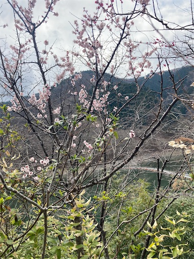 f:id:yukichkun:20210329111837j:image