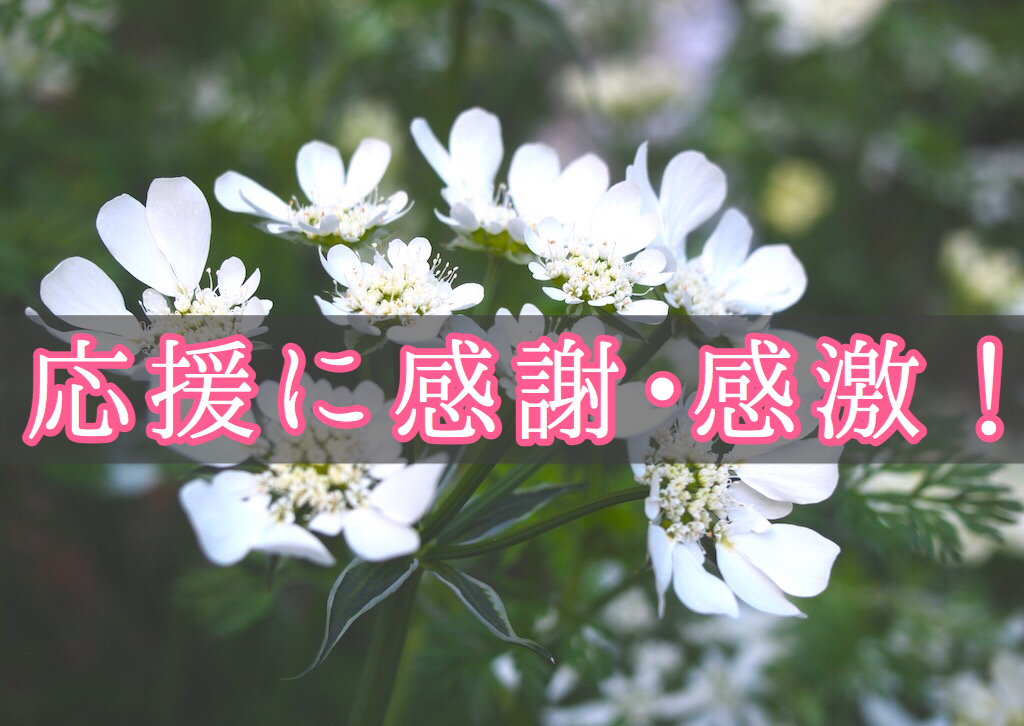 f:id:yukigao:20161106182023j:plain