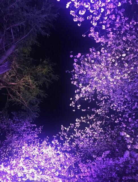f:id:yukihaaka:20170410220529j:image