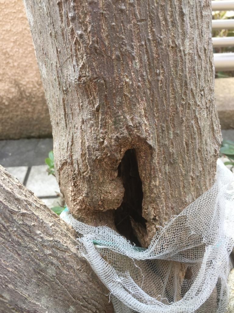 樹洞 - 春田造園の日常