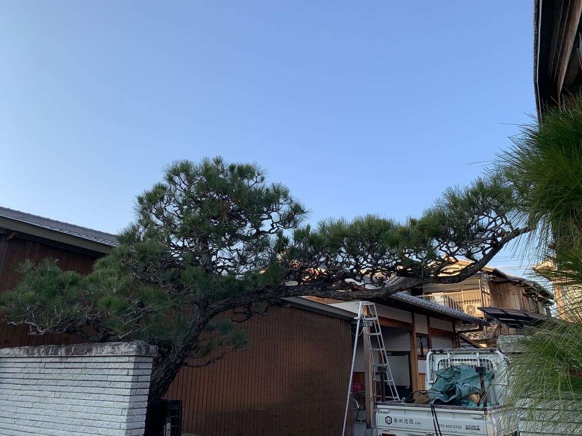 f:id:yukihatu:20210201201920j:plain