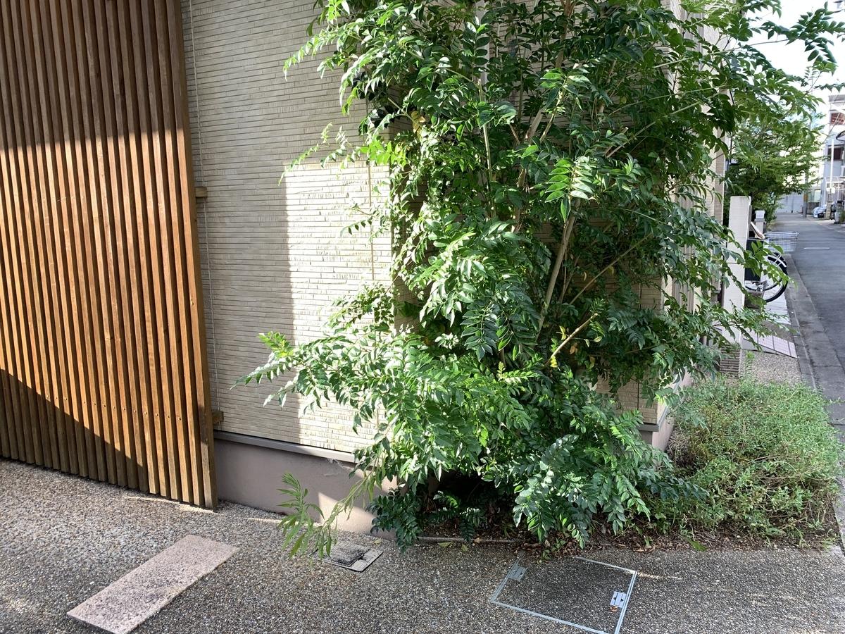 f:id:yukihatu:20210829204605j:plain
