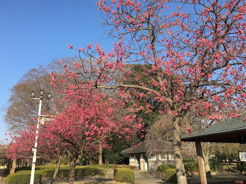f:id:yukiho2451:20190321152441j:image