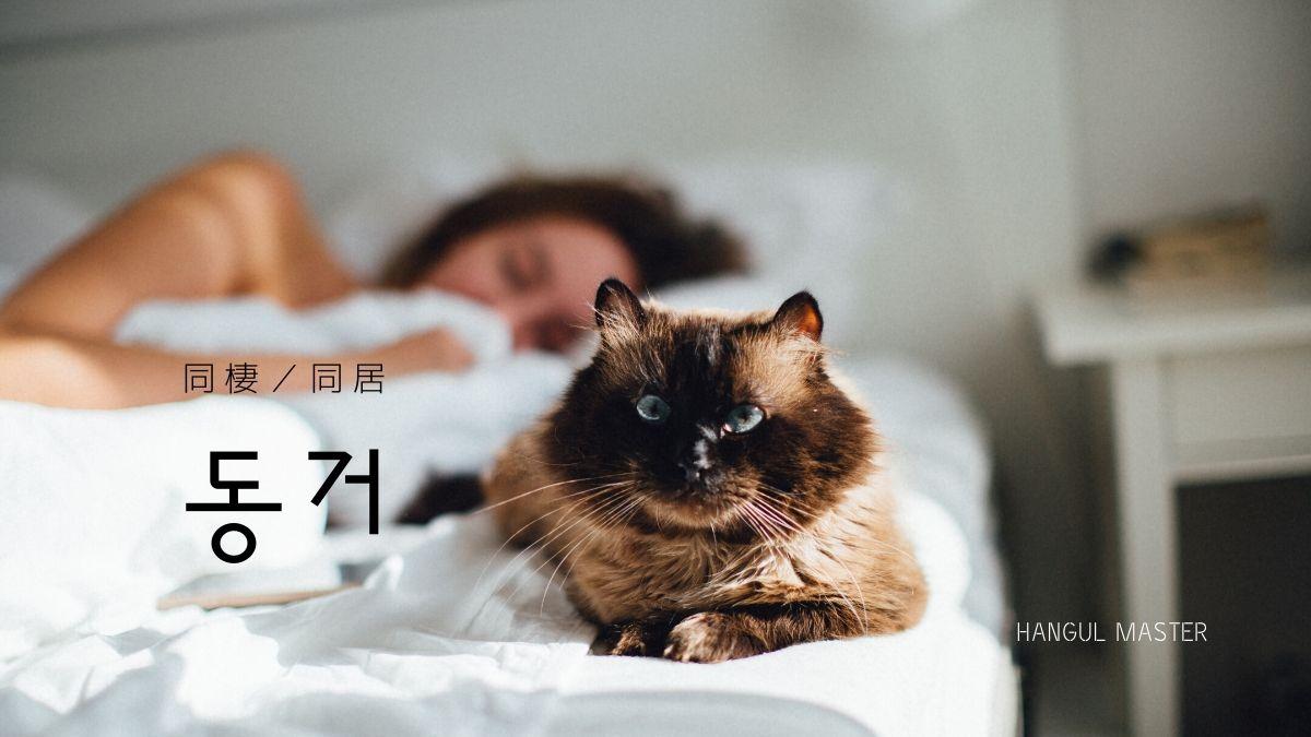f:id:yukik8er:20191104200430j:plain