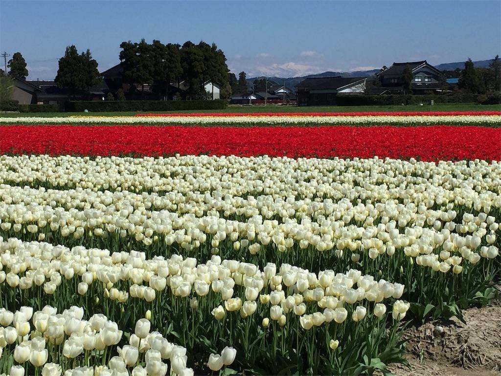 f:id:yukiko-f:20170423200417j:image