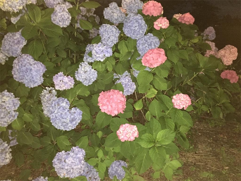 f:id:yukiko-f:20170708225623j:image