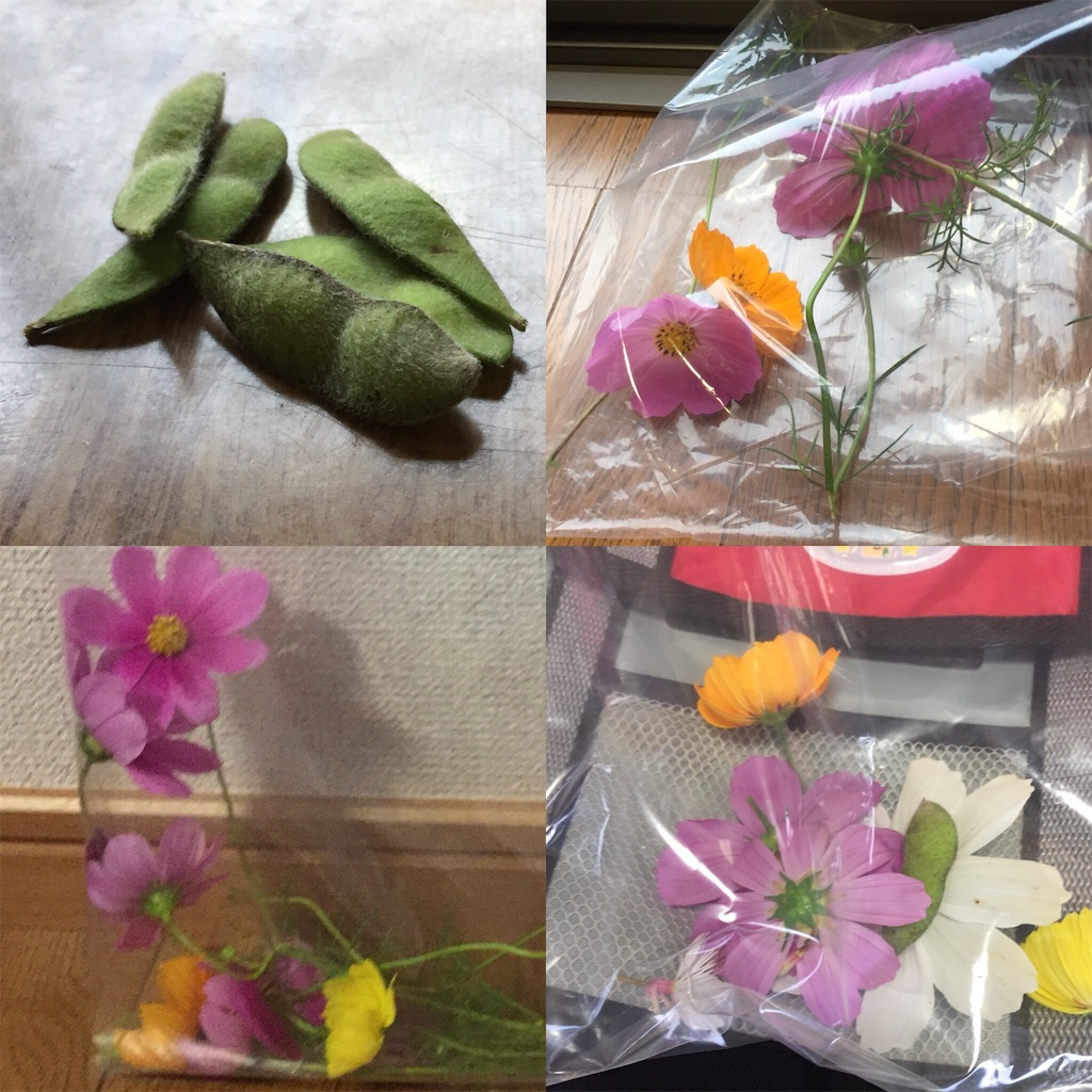 f:id:yukiko-f:20181004230109j:image