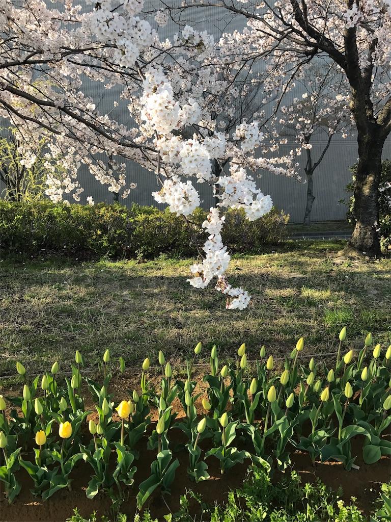 f:id:yukiko-pilates:20170414174540j:image