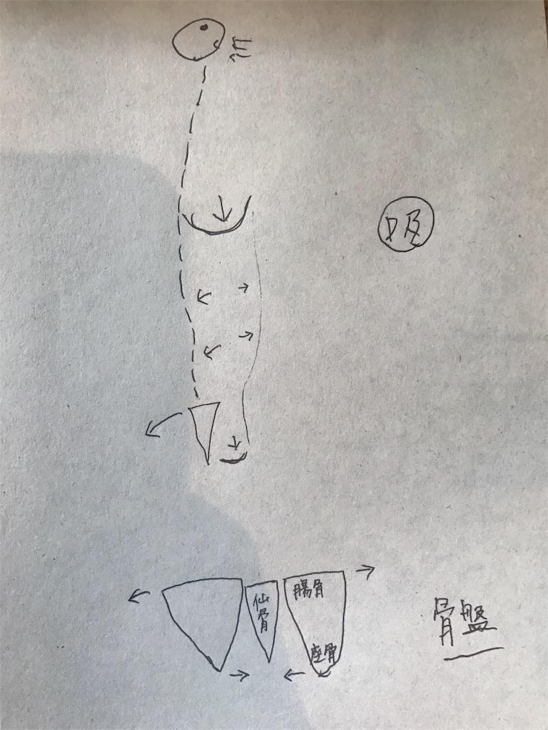 f:id:yukiko-pilates:20170425132614j:image