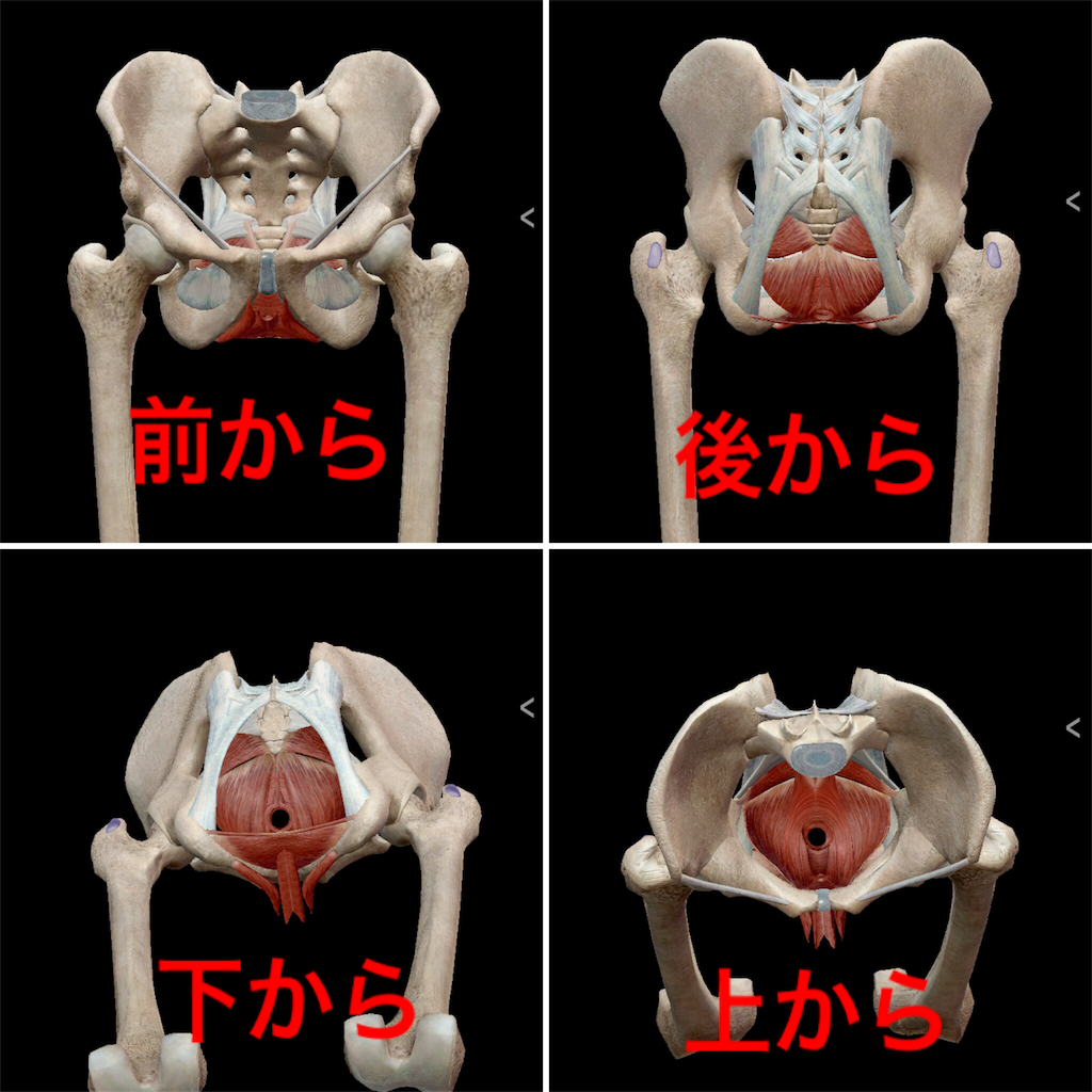 f:id:yukiko-pilates:20181229114737p:image