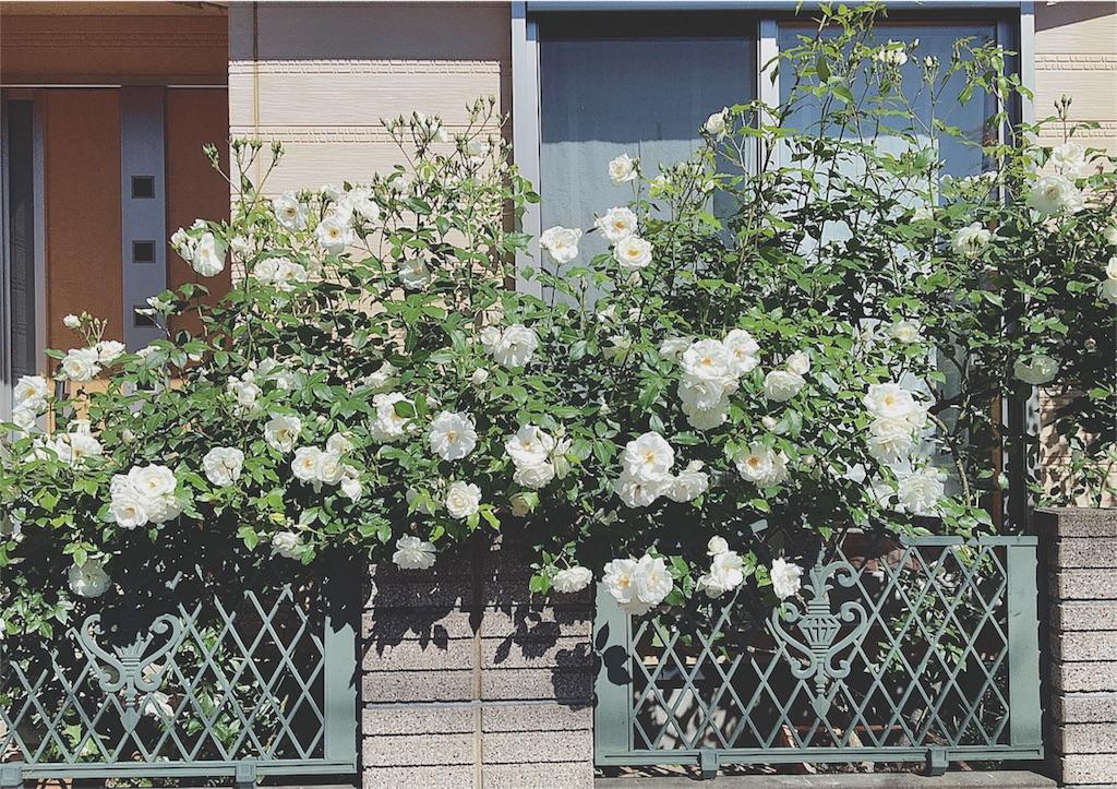 f:id:yukiko_tea:20160512114847j:image