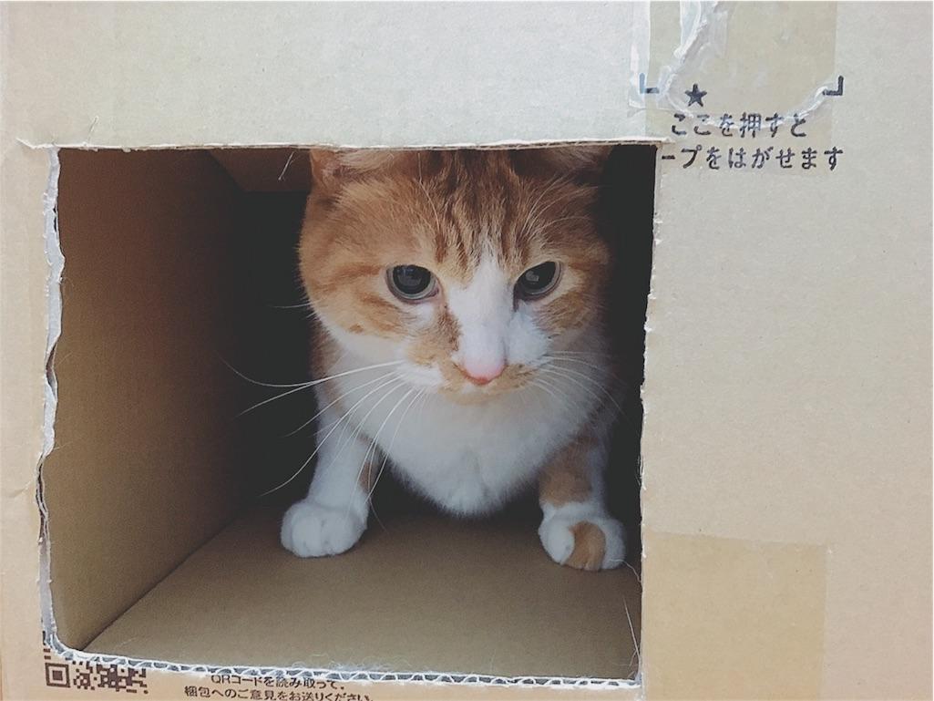 f:id:yukiko_tea:20170202121202j:image