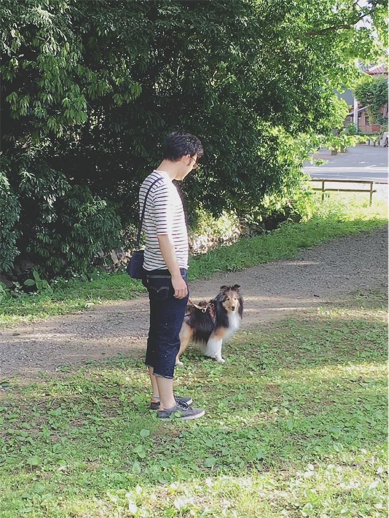 f:id:yukiko_tea:20170605165443j:image