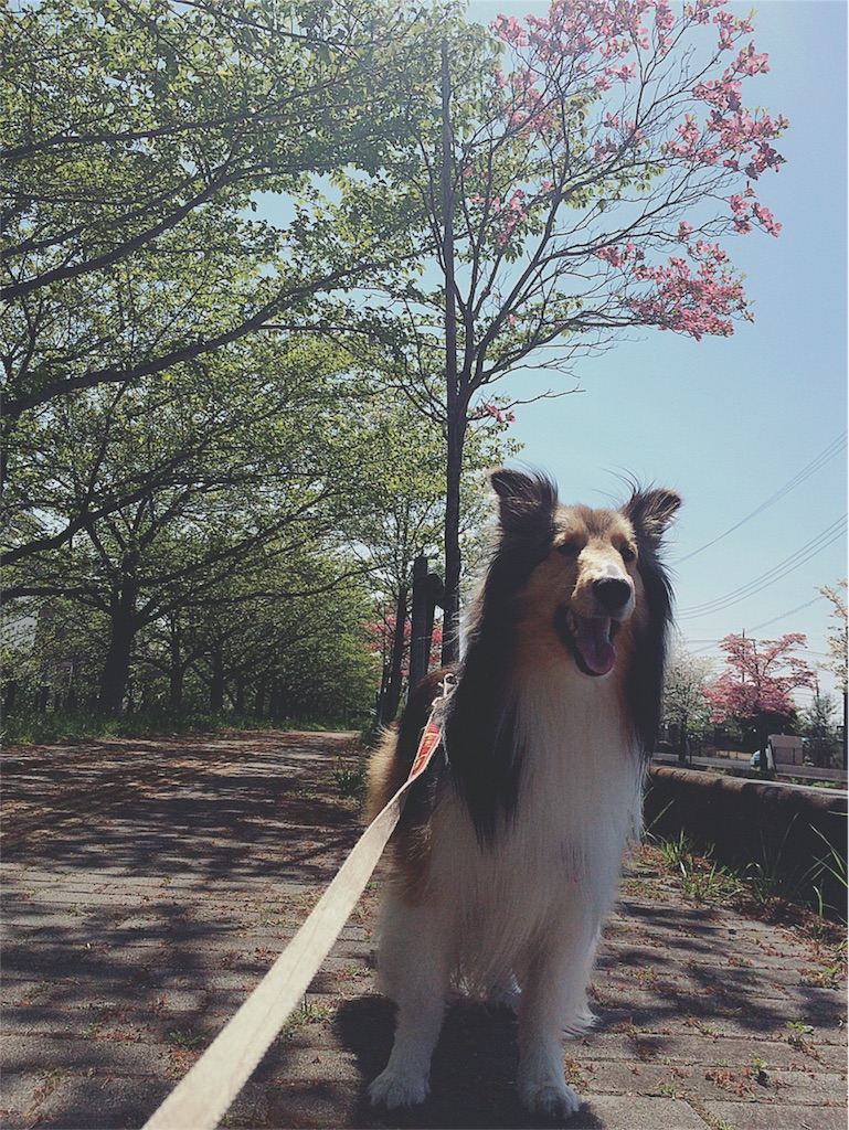 f:id:yukiko_tea:20170623092902j:image