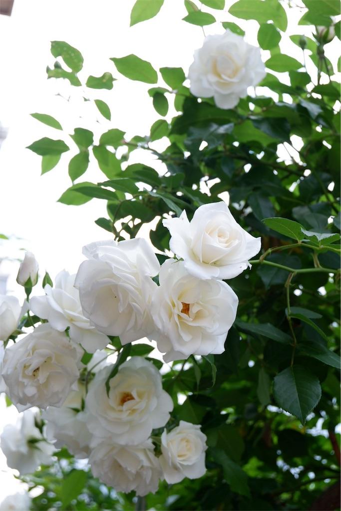 f:id:yukiko_tea:20180504194105j:image