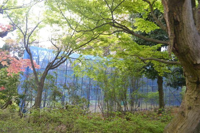 f:id:yukikoashiato:20170529120527j:plain