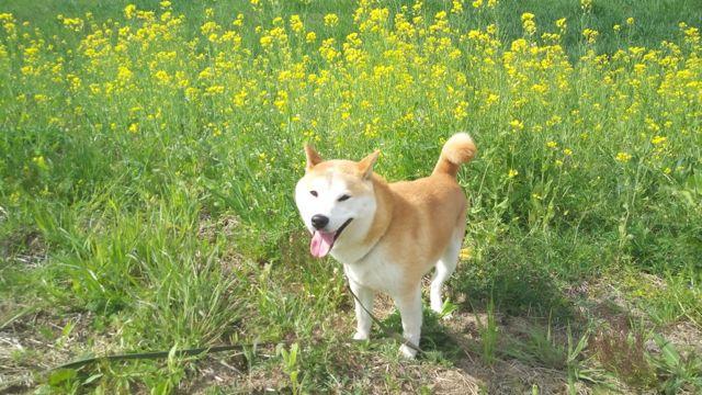 f:id:yukikoashiato:20170621001309j:plain