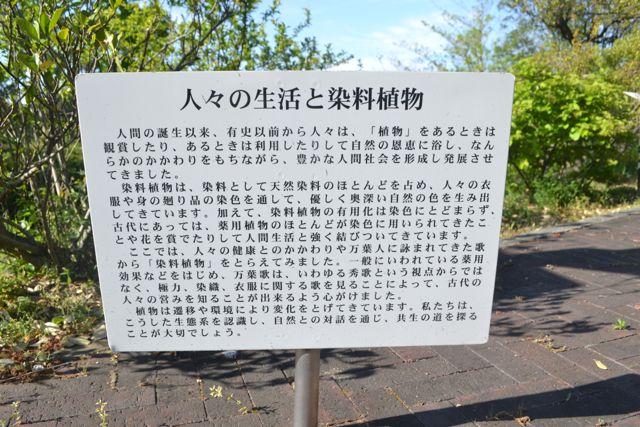 f:id:yukikoashiato:20170627181600j:plain