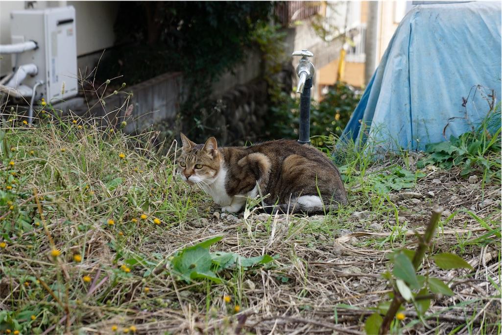 f:id:yukimaru-yuge:20161122102121j:image
