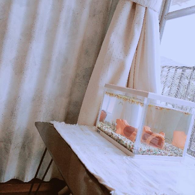 f:id:yukimaru1769:20180425020407j:image