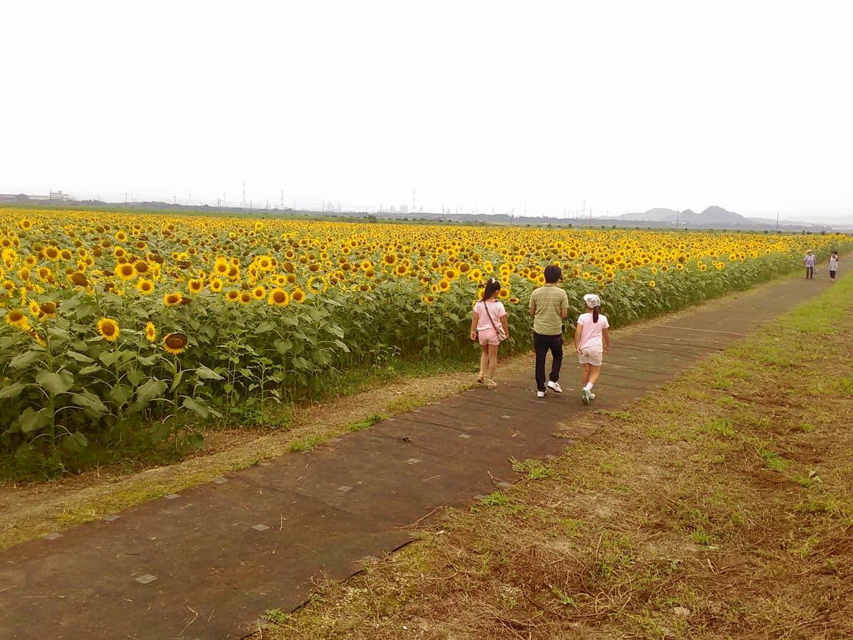 kasaoka-bay-farm