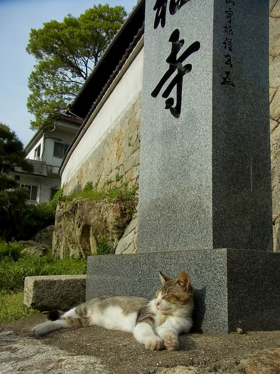 cat-at-the-temple
