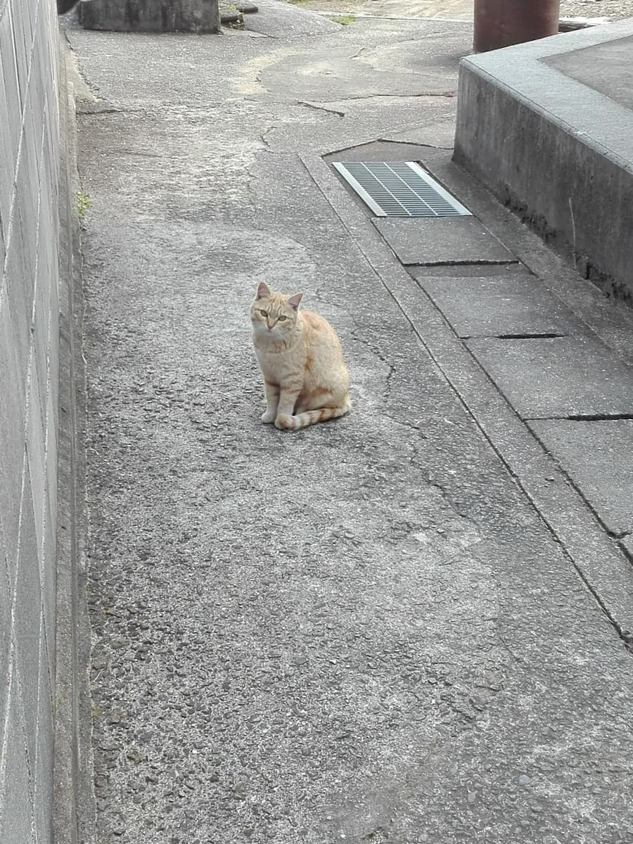 orange-tabby-cat