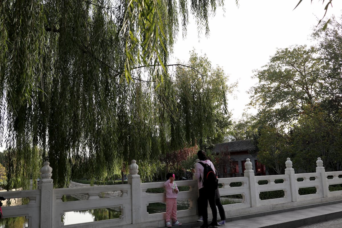 bridge-willow-tree