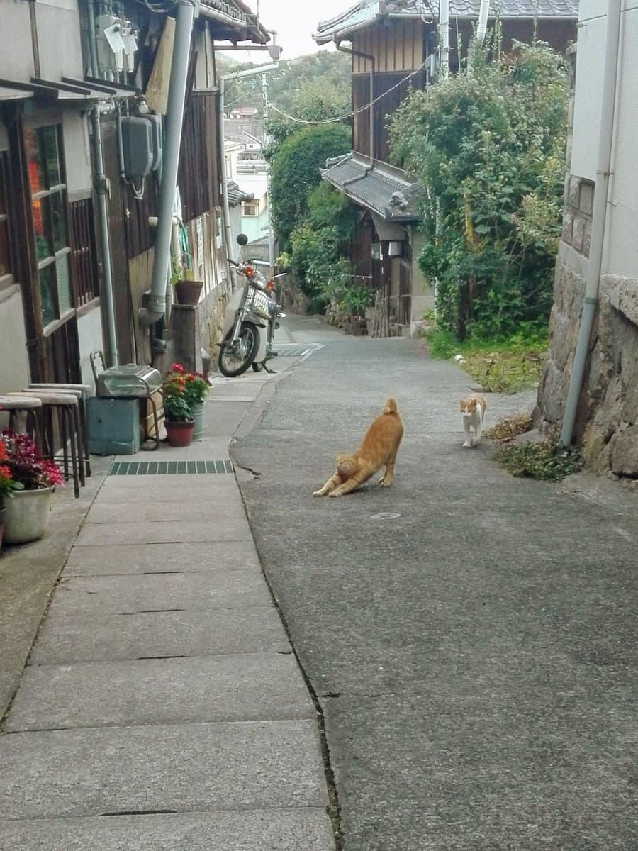 cat-stretching
