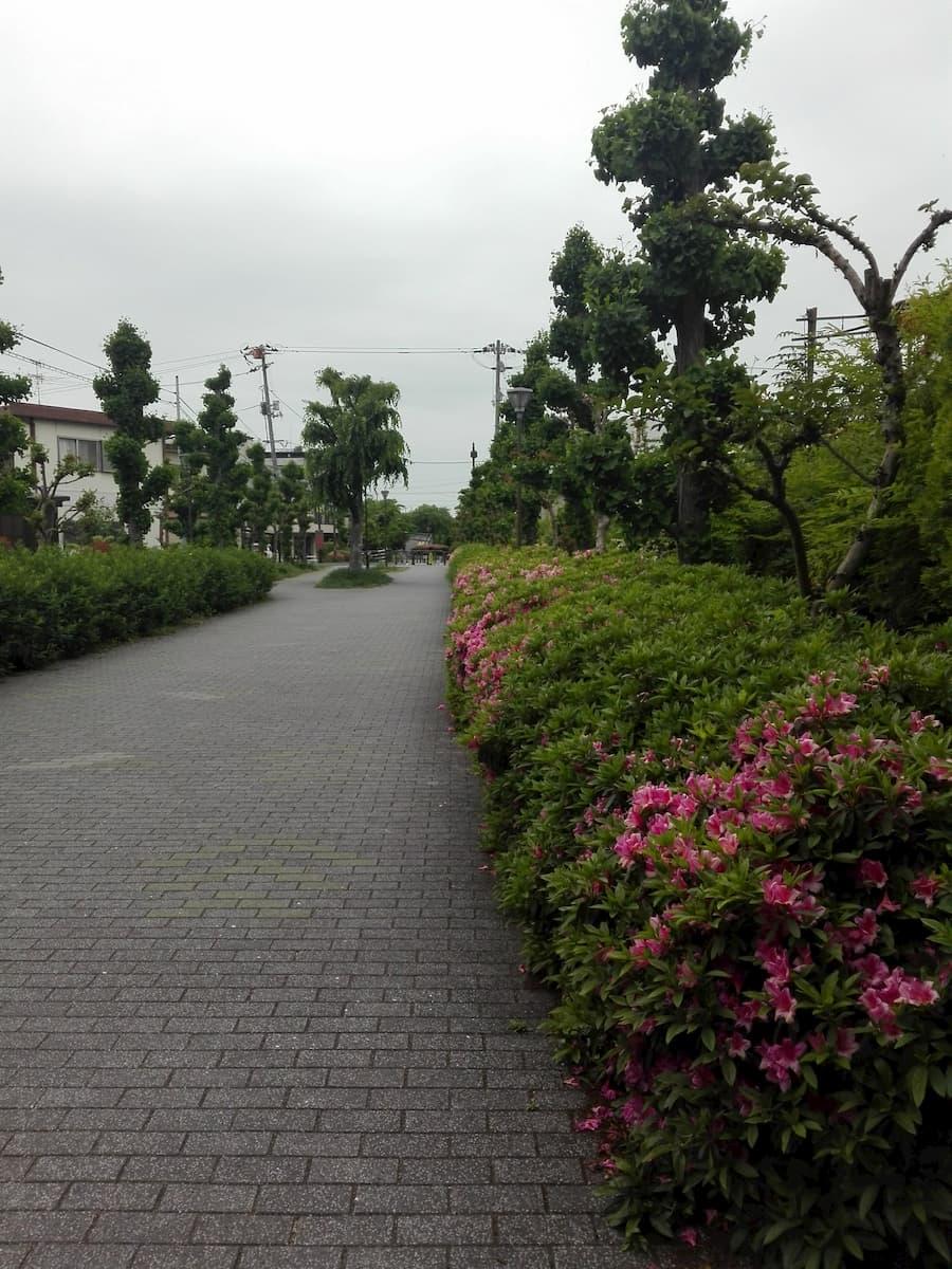 azalea-rinko-green-avenue