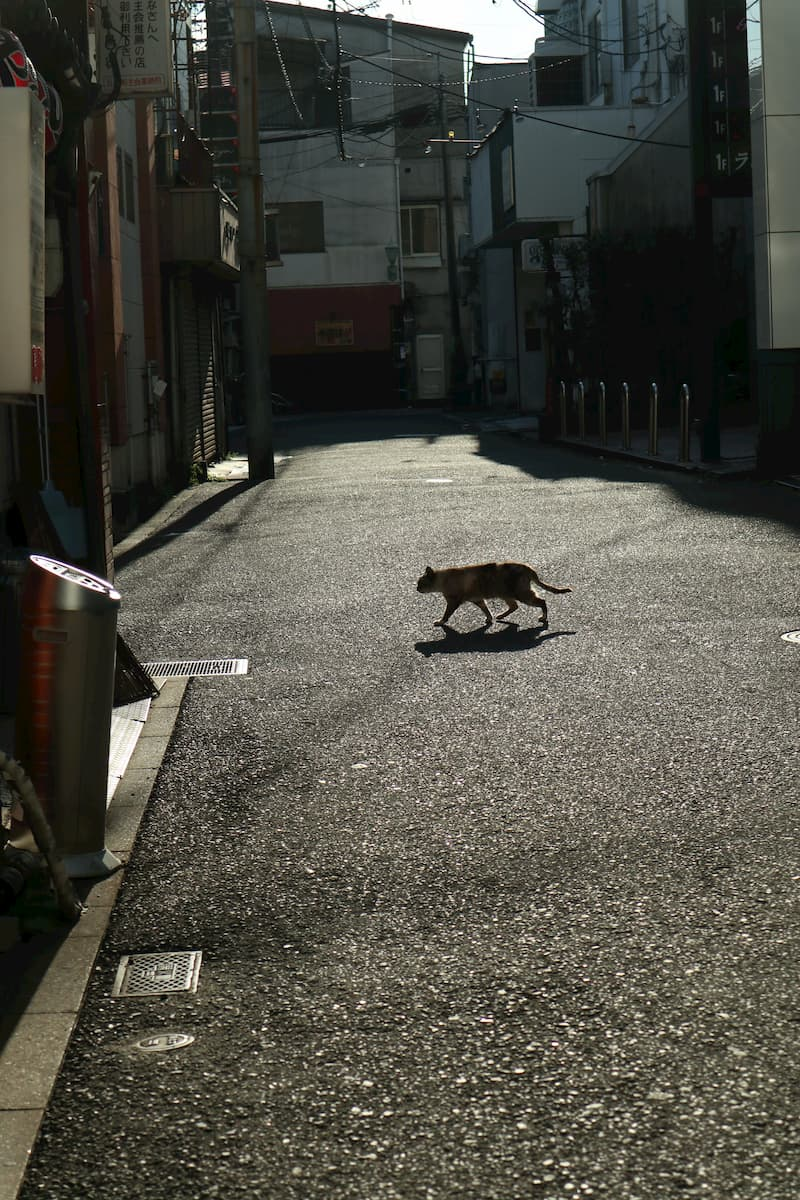 Onomichi-alley-cat