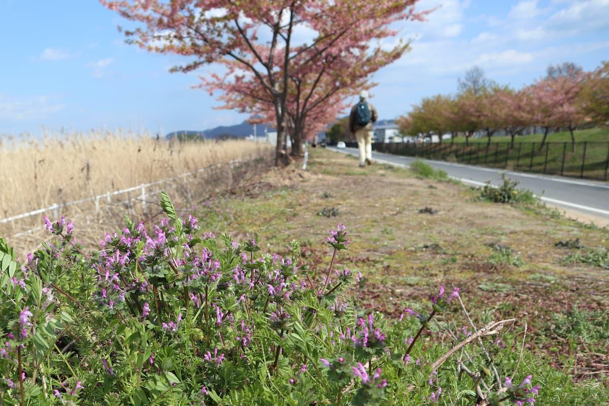 lake-Kojima-Hanakairo